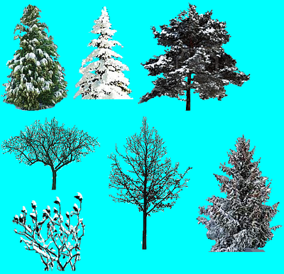 WinterPlant3.PNG