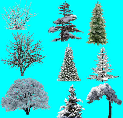 WinterPlant2.PNG