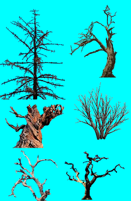 DeadTrees2.PNG